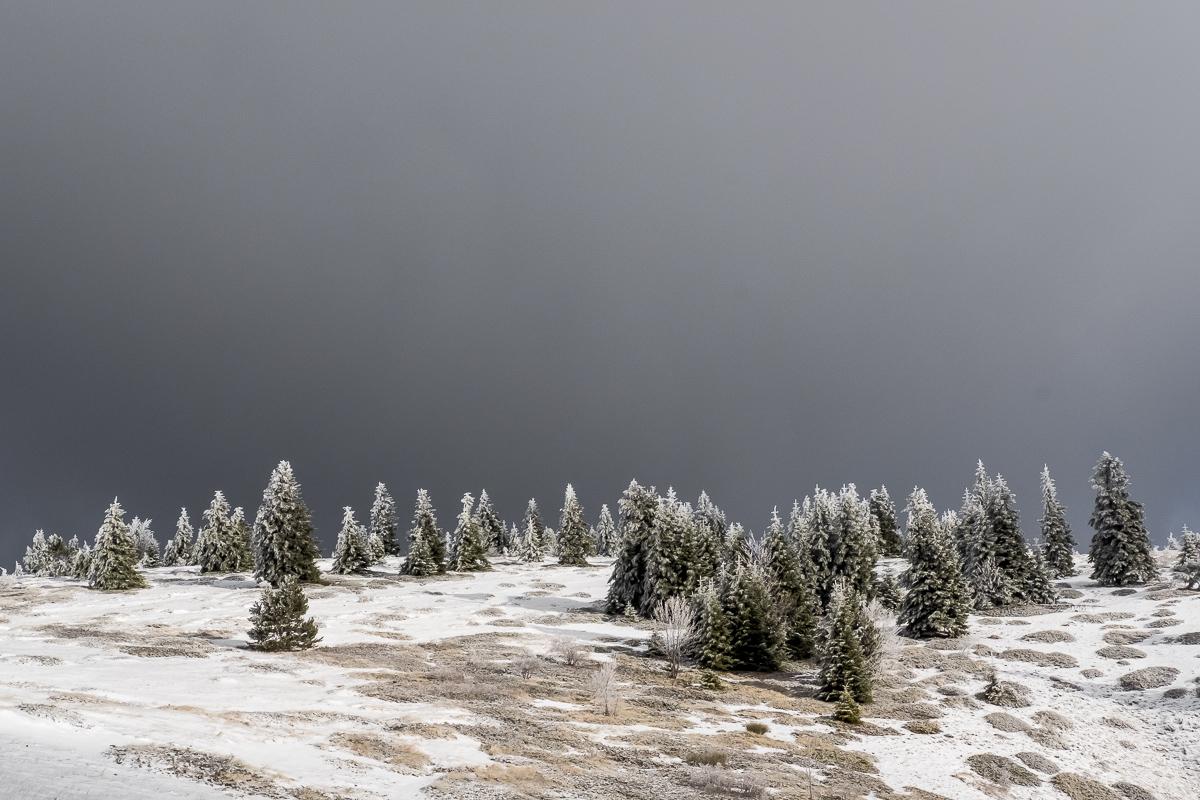 lure-hiver-6892
